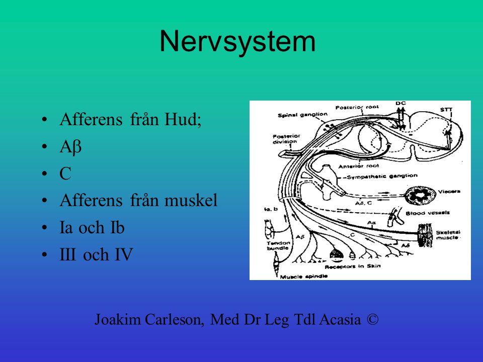 Nervsystem Afferens från Hud; Ab C Afferens från muskel Ia och Ib