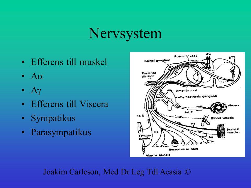 Nervsystem Efferens till muskel Aa Ag Efferens till Viscera Sympatikus