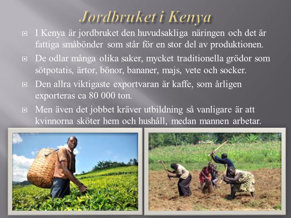 Jordbruket i Kenya I Kenya är jordbruket den huvudsakliga näringen och det är fattiga småbönder som står för en stor del av produktionen.