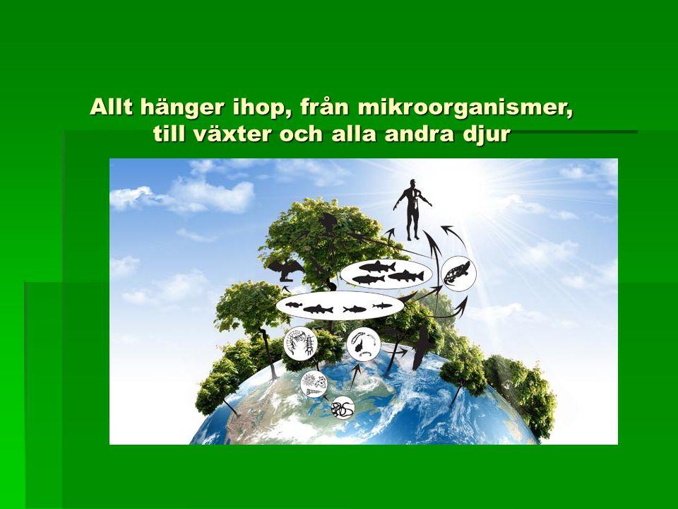 Allt hänger ihop, från mikroorganismer, till växter och alla andra djur