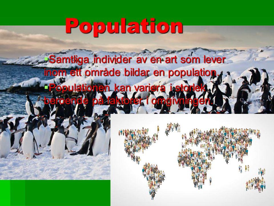 Population Samtliga individer av en art som lever inom ett område bildar en population.