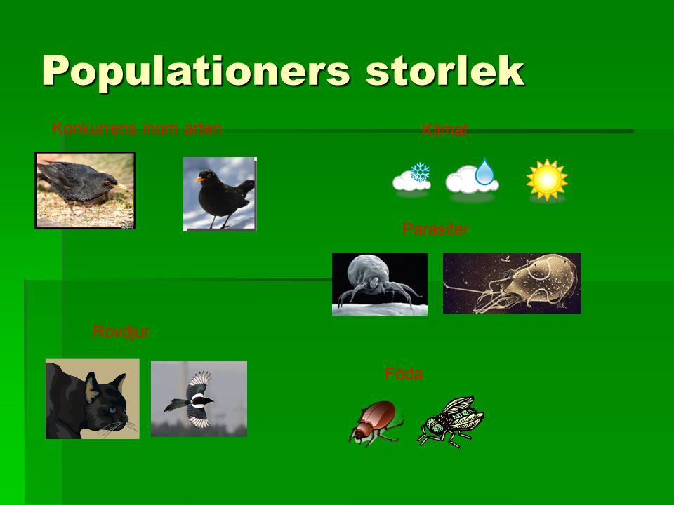 Populationers storlek