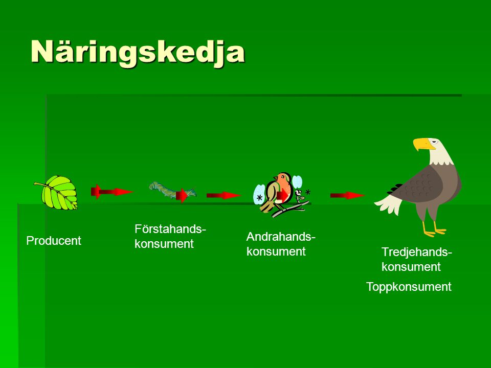 Näringskedja Förstahands- konsument Andrahands- Producent konsument