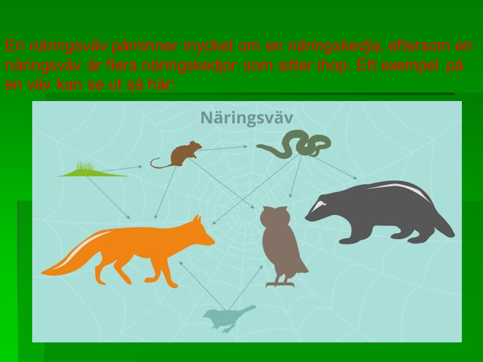 En näringsväv påminner mycket om en näringskedja, eftersom en näringsväv är flera näringskedjor som sitter ihop. Ett exempel på en väv kan se ut så här:
