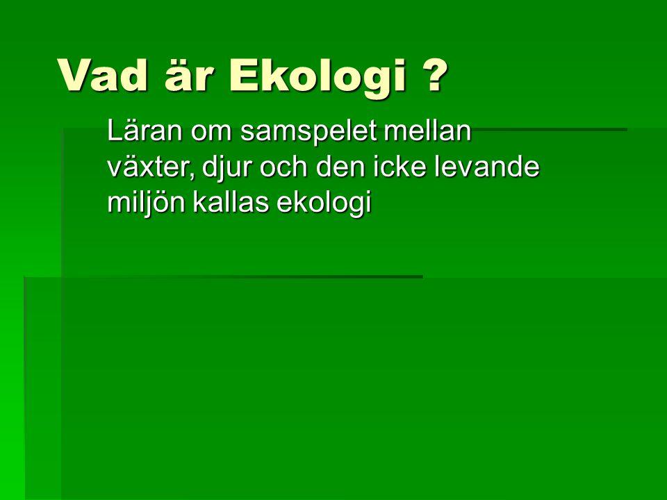 Vad är Ekologi .