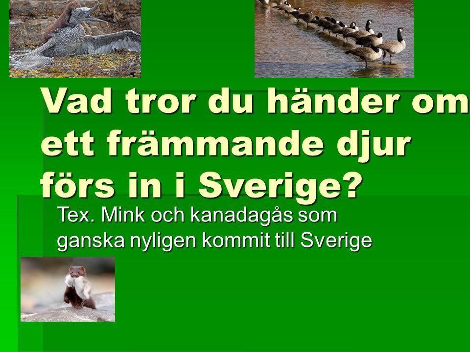 Vad tror du händer om ett främmande djur förs in i Sverige