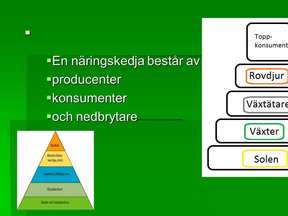 En näringskedja består av producenter konsumenter och nedbrytare