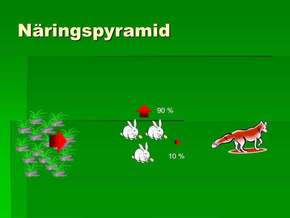 Näringspyramid 90 % 10 %