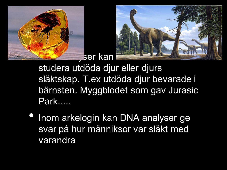 DNA analyser kan användas för att studera utdöda djur eller djurs släktskap. T.ex utdöda djur bevarade i bärnsten. Myggblodet som gav Jurasic Park.....