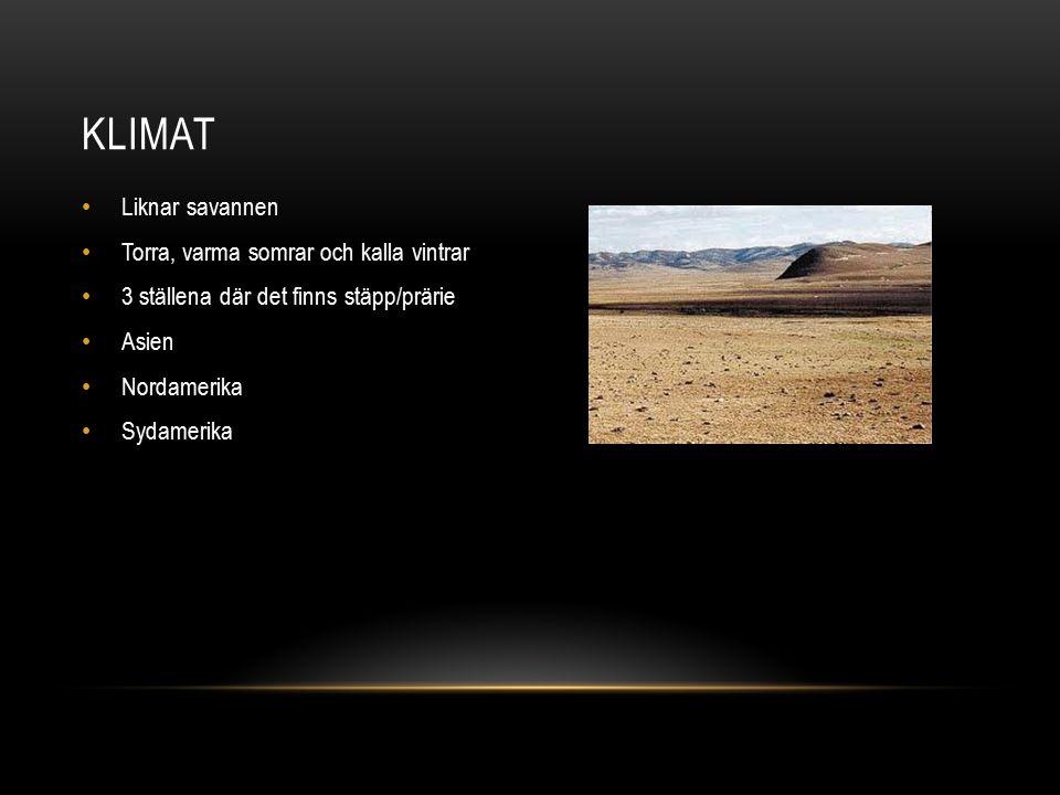 Klimat Liknar savannen Torra, varma somrar och kalla vintrar