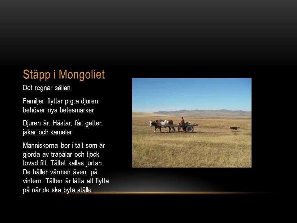 Stäpp i Mongoliet Det regnar sällan