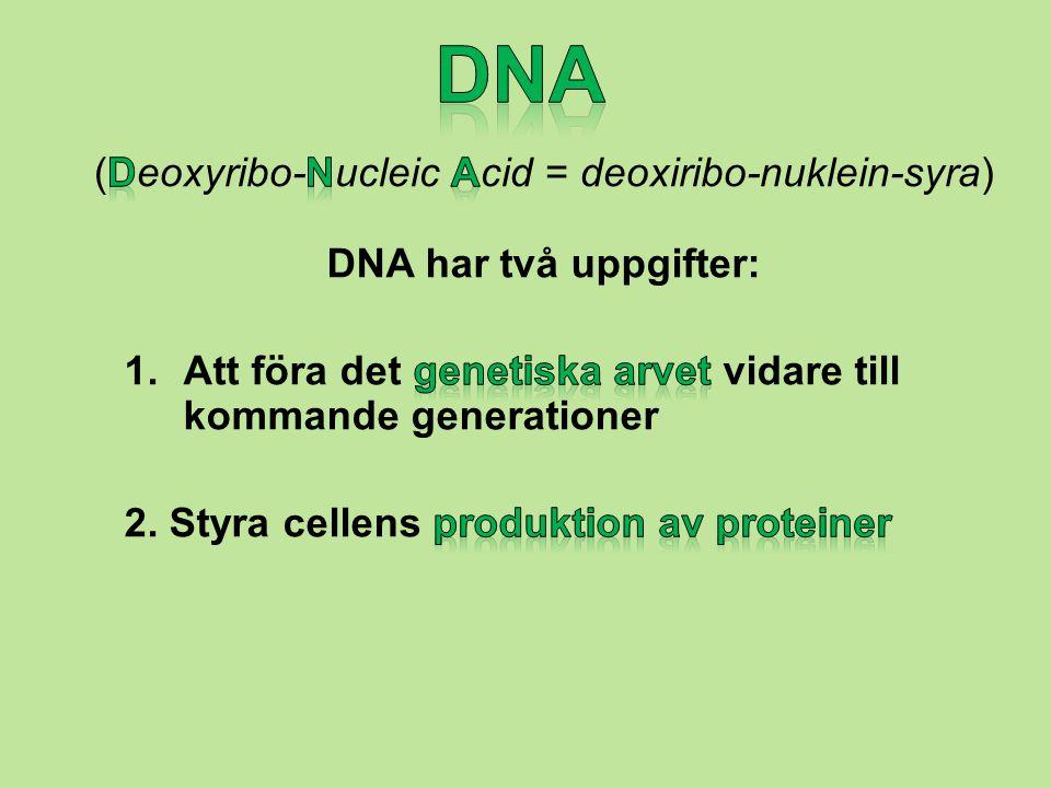 (Deoxyribo-Nucleic Acid = deoxiribo-nuklein-syra)