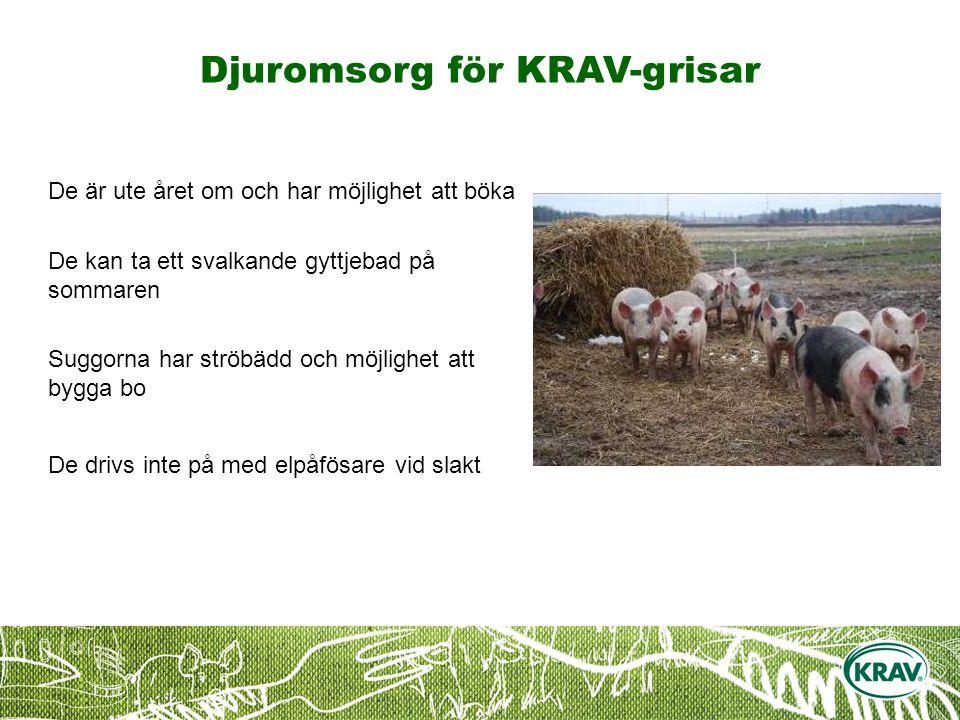 Djuromsorg för KRAV-grisar