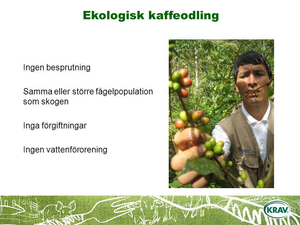 Ekologisk kaffeodling