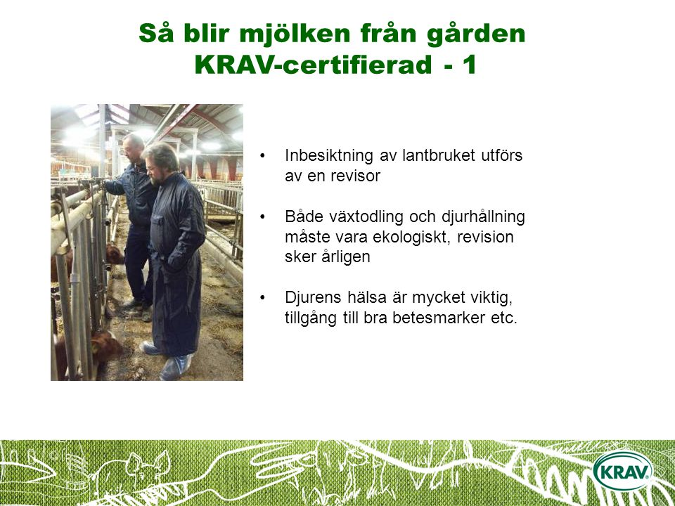 Så blir mjölken från gården KRAV-certifierad - 1