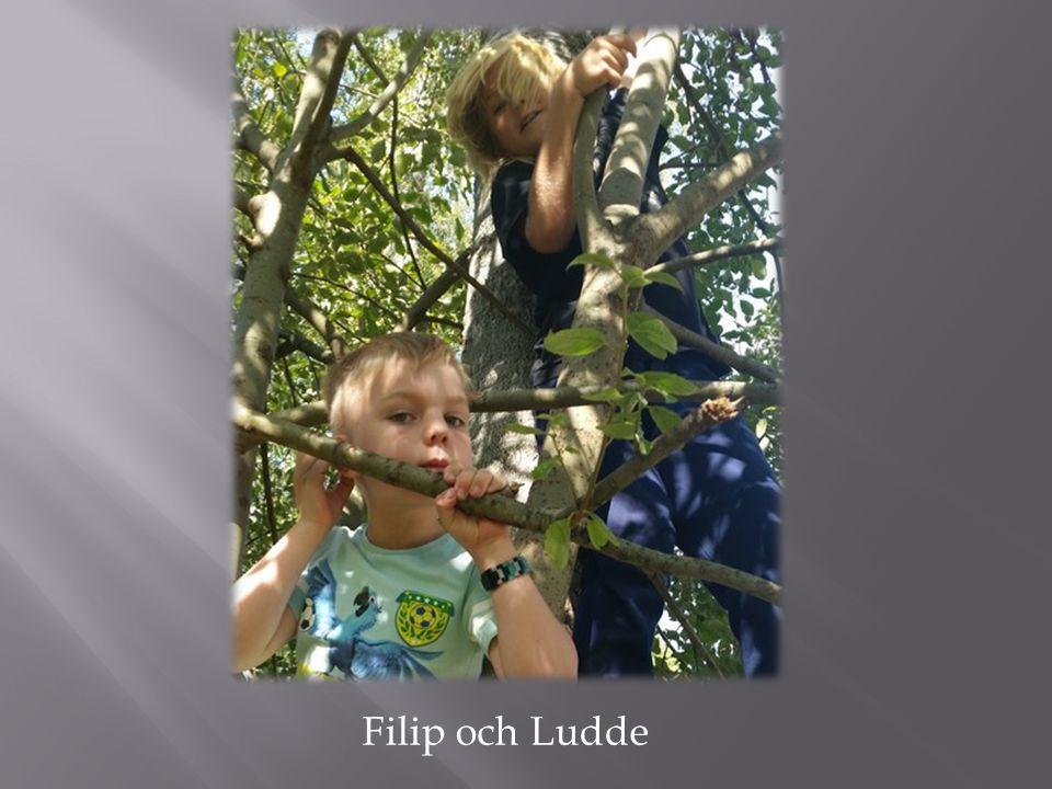 Filip och Ludde