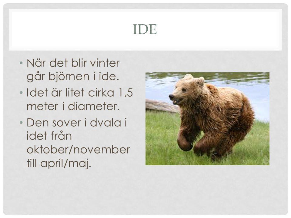 ide När det blir vinter går björnen i ide.