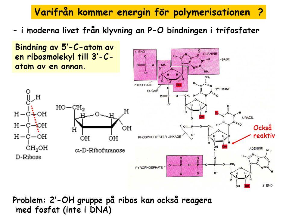 Varifrån kommer energin för polymerisationen