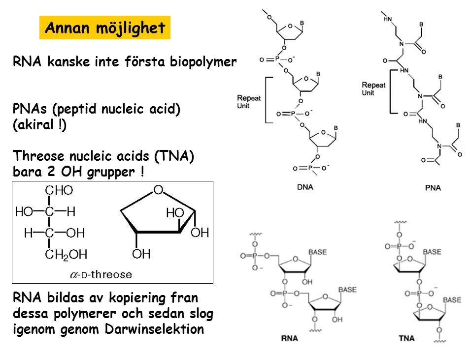 Annan möjlighet RNA kanske inte första biopolymer