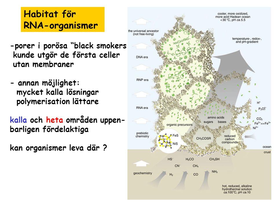 Habitat för RNA-organismer -porer i porösa black smokers