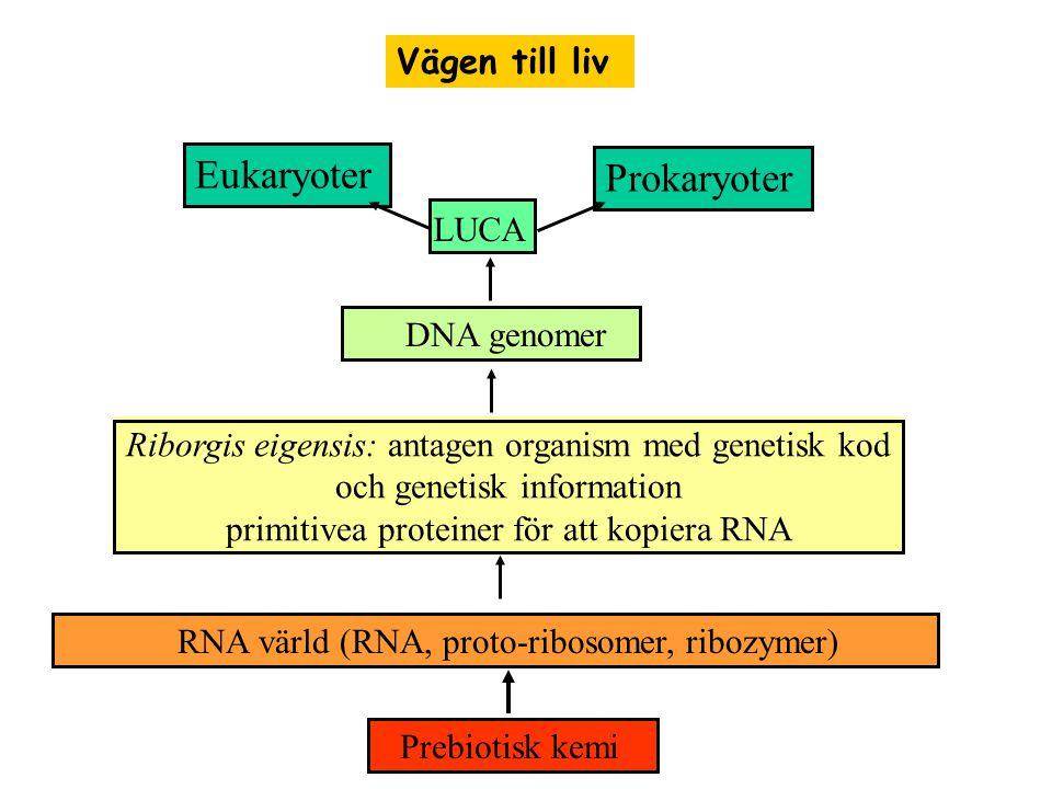 primitivea proteiner för att kopiera RNA