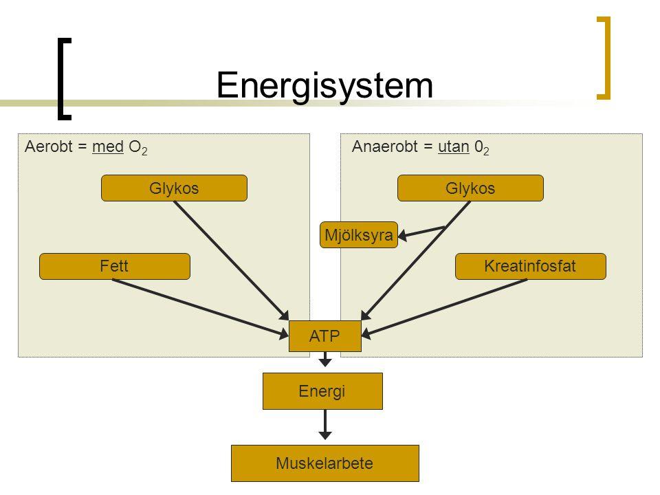 Energisystem Aerobt = med O2 Anaerobt = utan 02 Glykos Glykos