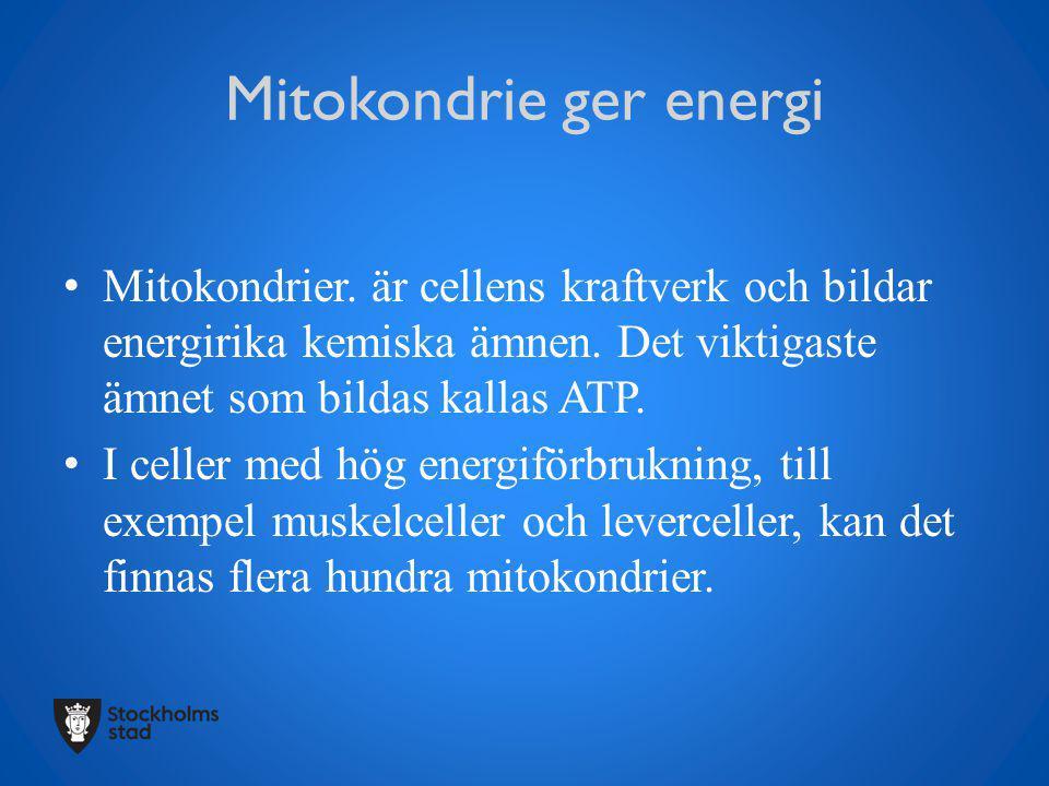Mitokondrie ger energi