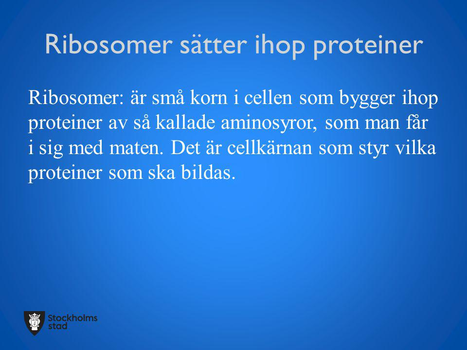 Ribosomer sätter ihop proteiner