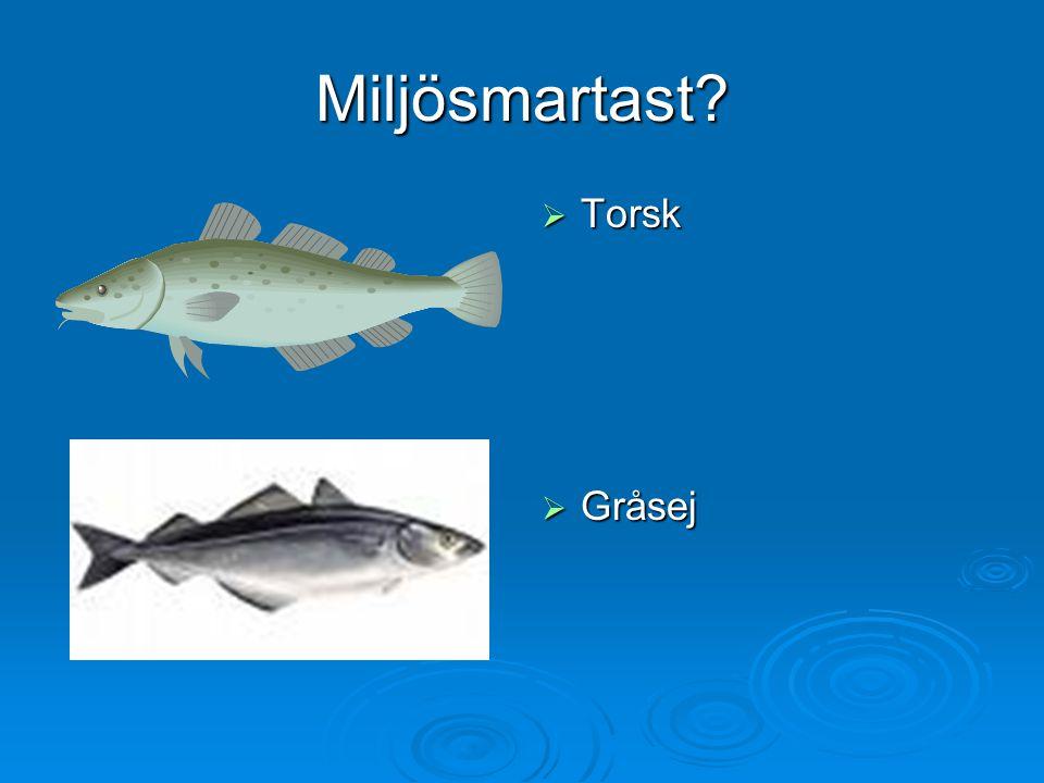 Miljösmartast Torsk Gråsej
