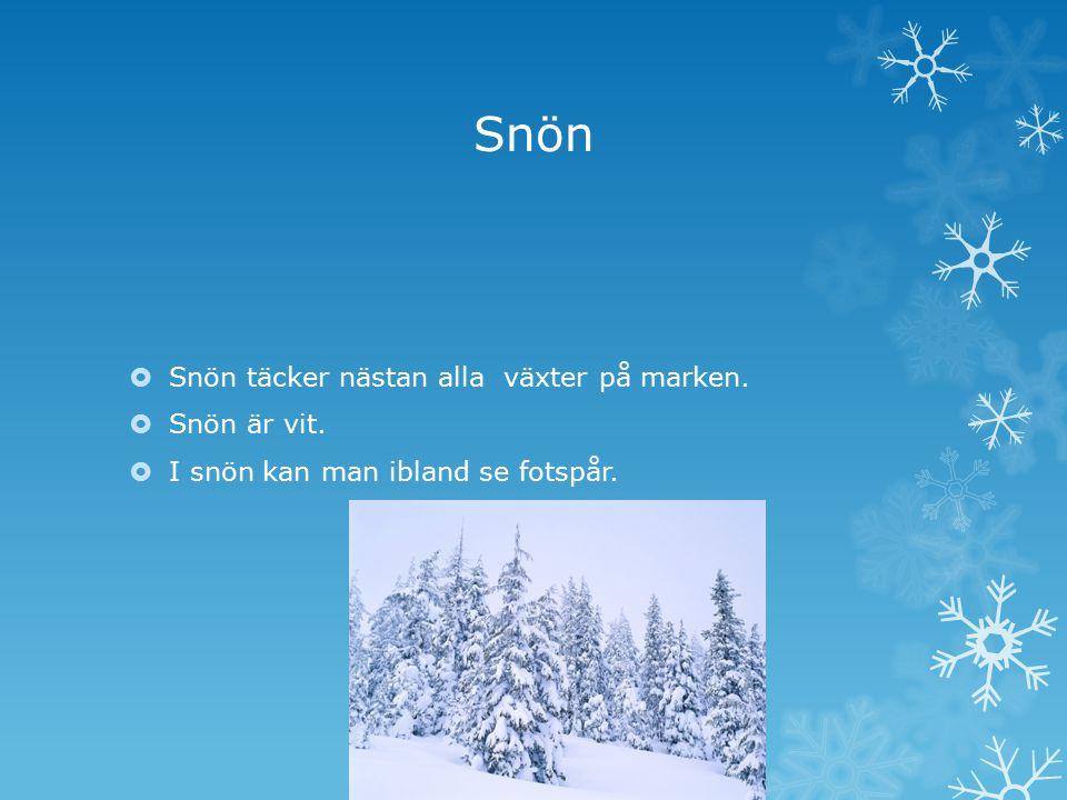 Snön Snön täcker nästan alla växter på marken. Snön är vit.