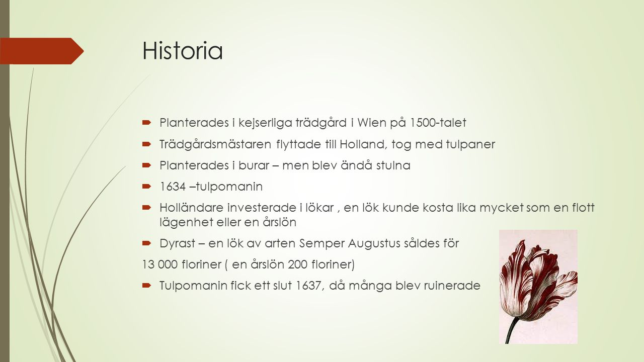 Historia Planterades i kejserliga trädgård i Wien på 1500-talet