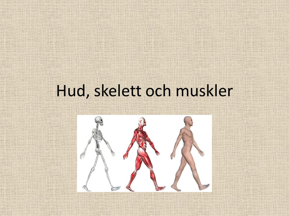 Hud, skelett och muskler