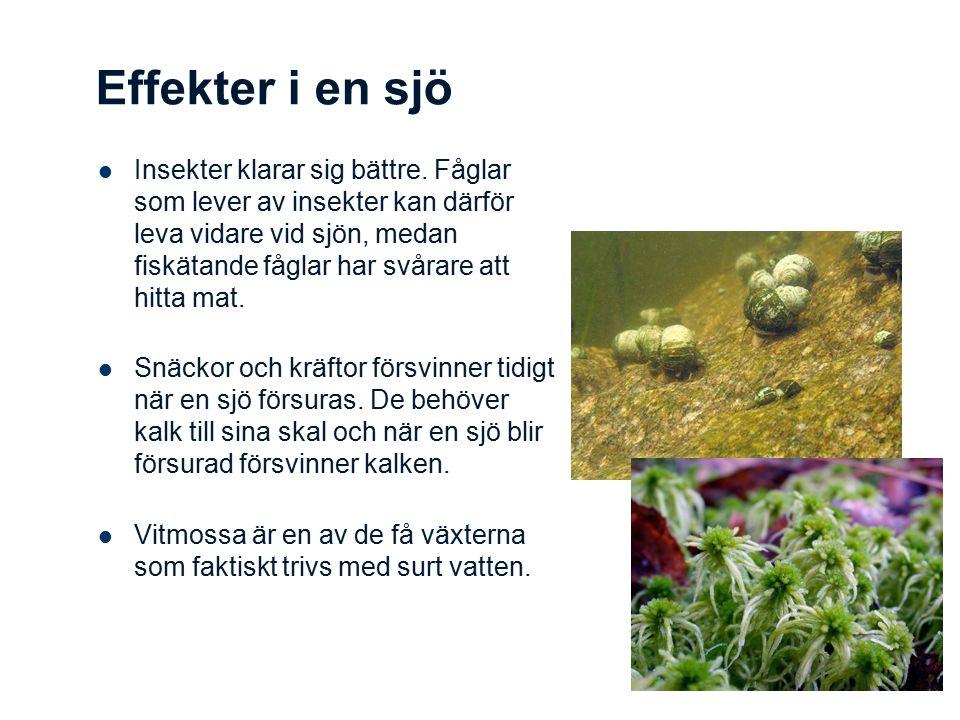 Effekter i en sjö