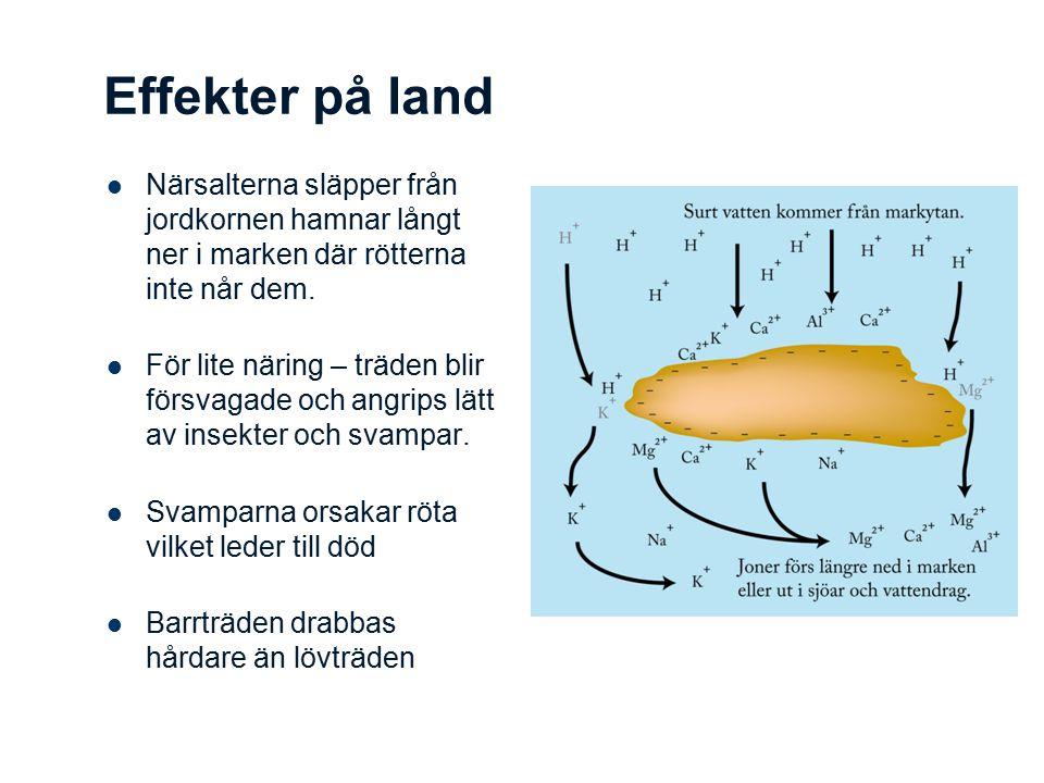 Effekter på land Närsalterna släpper från jordkornen hamnar långt ner i marken där rötterna inte når dem.