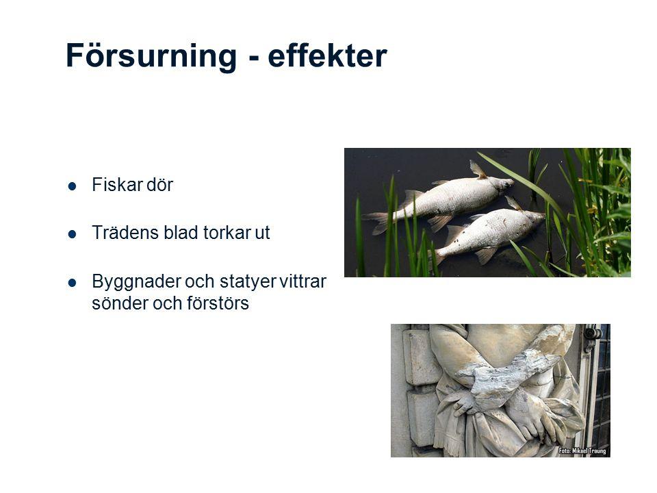 Försurning - effekter Fiskar dör Trädens blad torkar ut