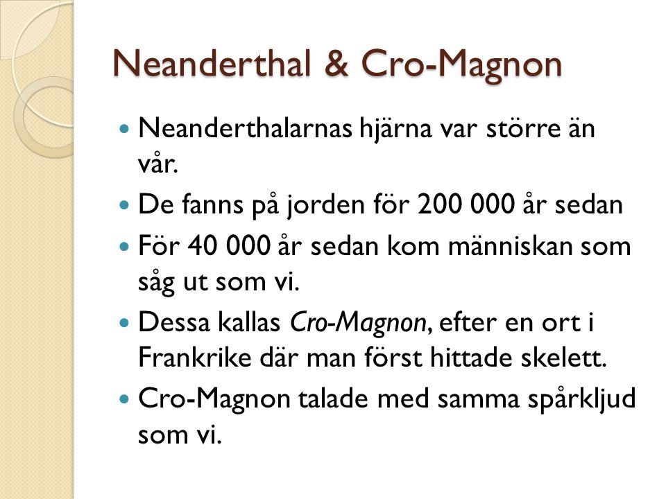 Neanderthal & Cro-Magnon