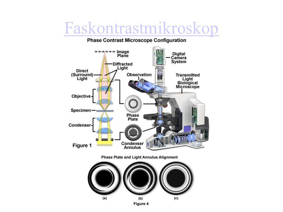 Faskontrastmikroskop