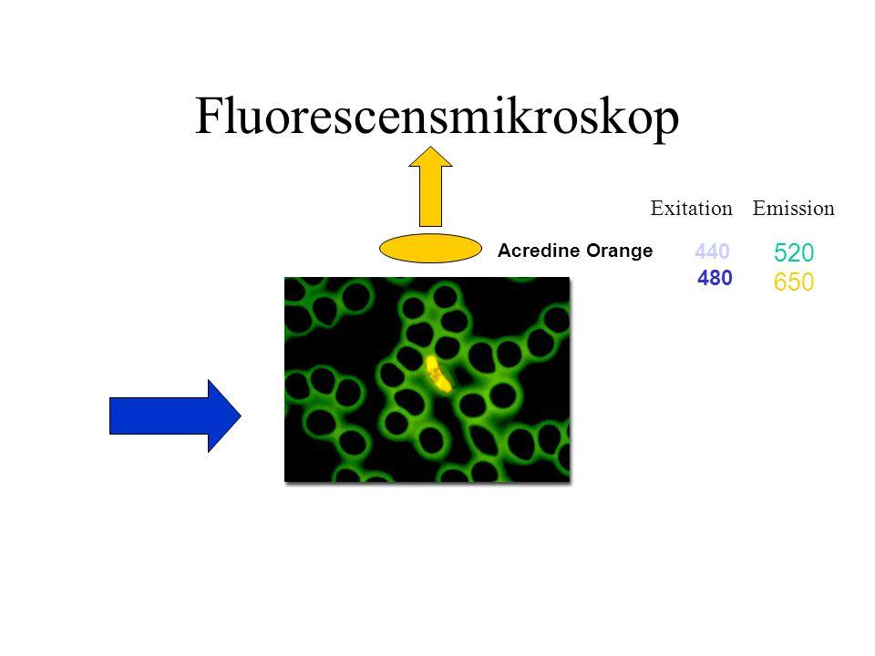 Fluorescensmikroskop