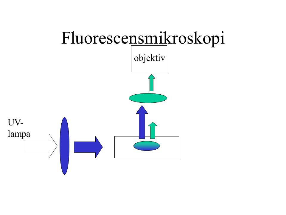 Fluorescensmikroskopi