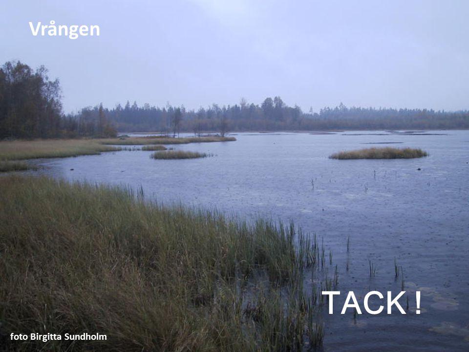 Vrången TACK ! foto Birgitta Sundholm