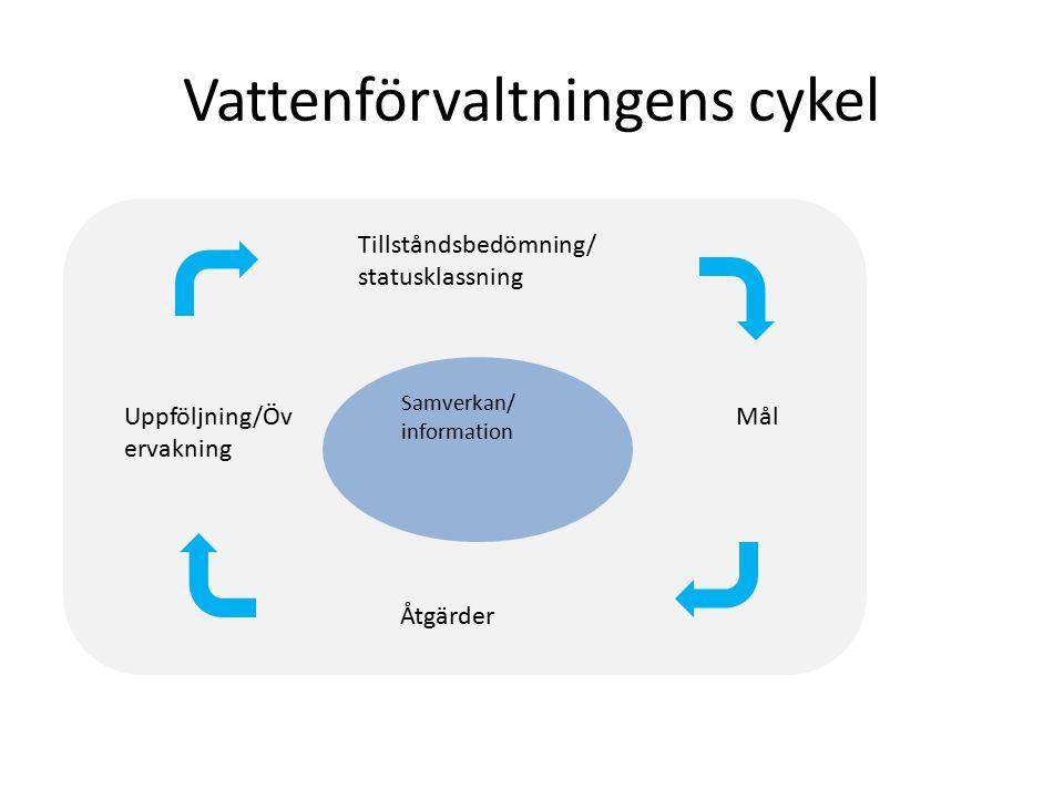 Vattenförvaltningens cykel