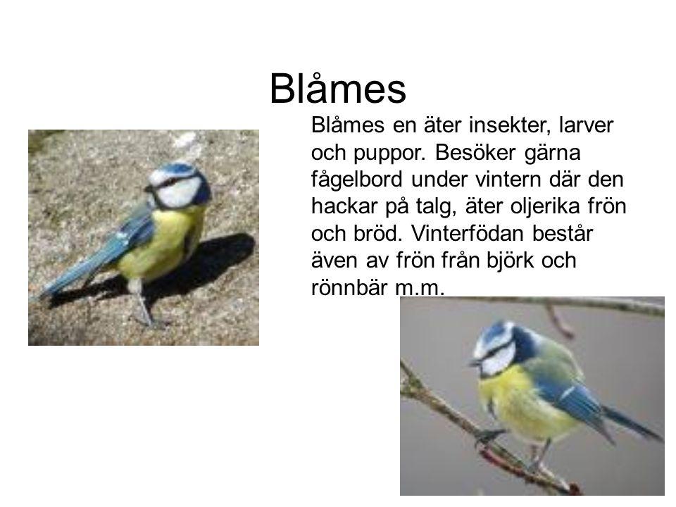 Blåmes