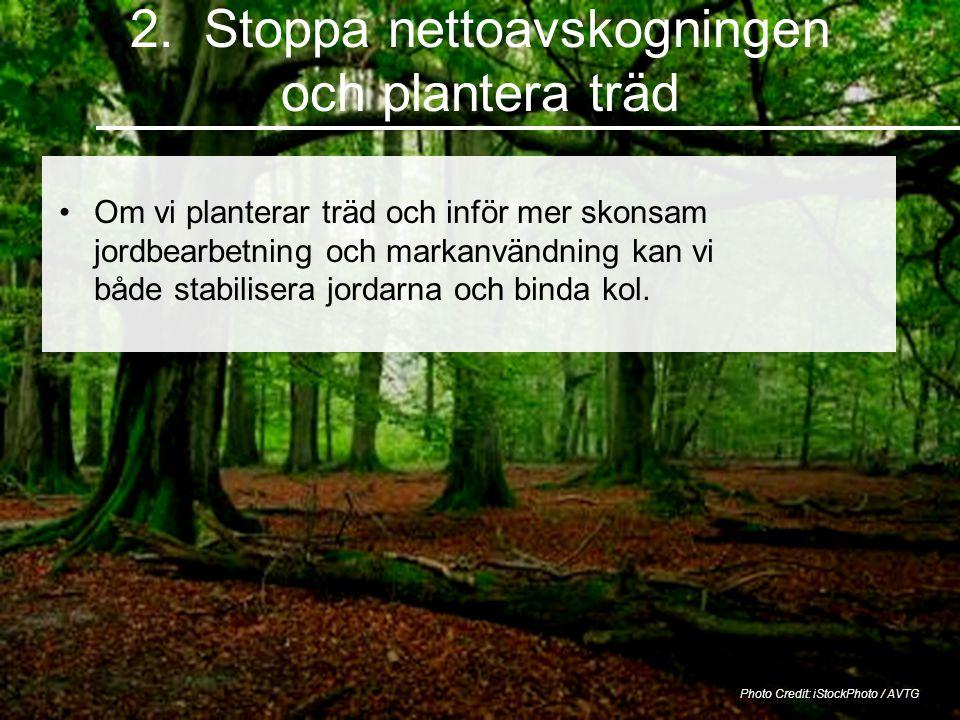 2. Stoppa nettoavskogningen och plantera träd