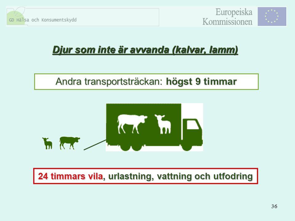 Djur som inte är avvanda (kalvar, lamm)