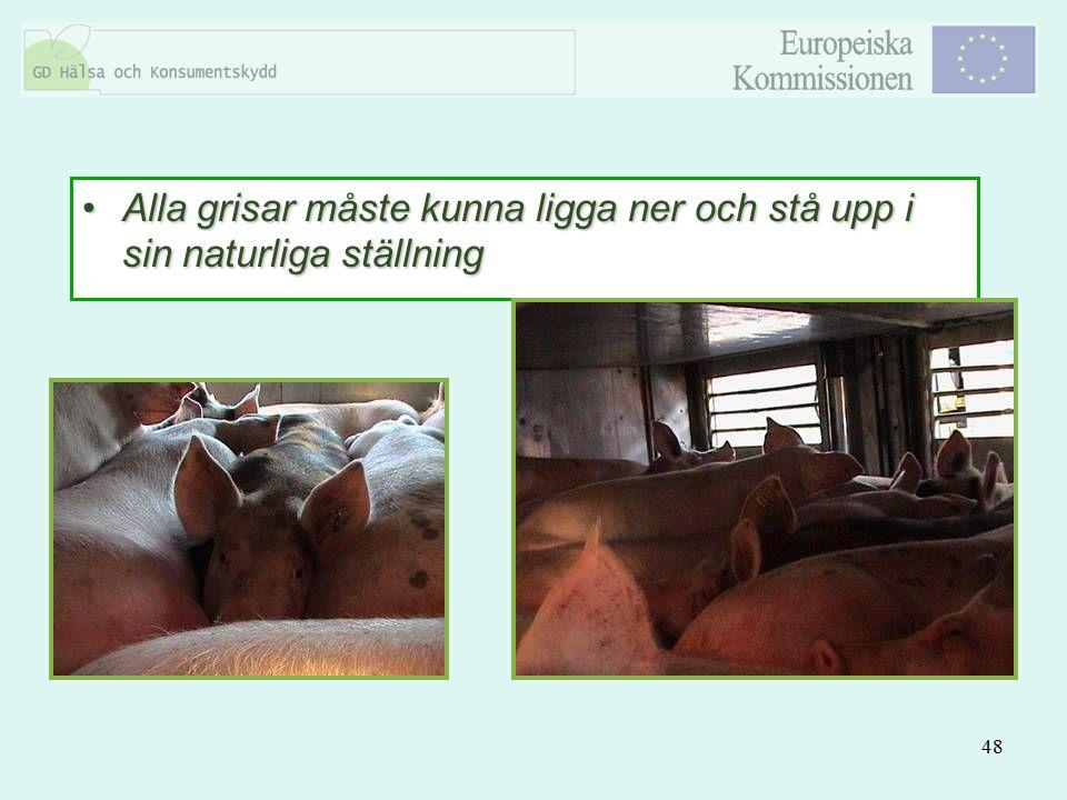 Alla grisar måste kunna ligga ner och stå upp i sin naturliga ställning