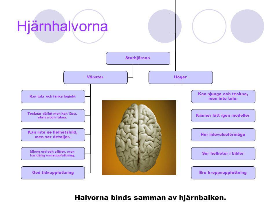 Hjärnhalvorna Halvorna binds samman av hjärnbalken. Storhjärnan