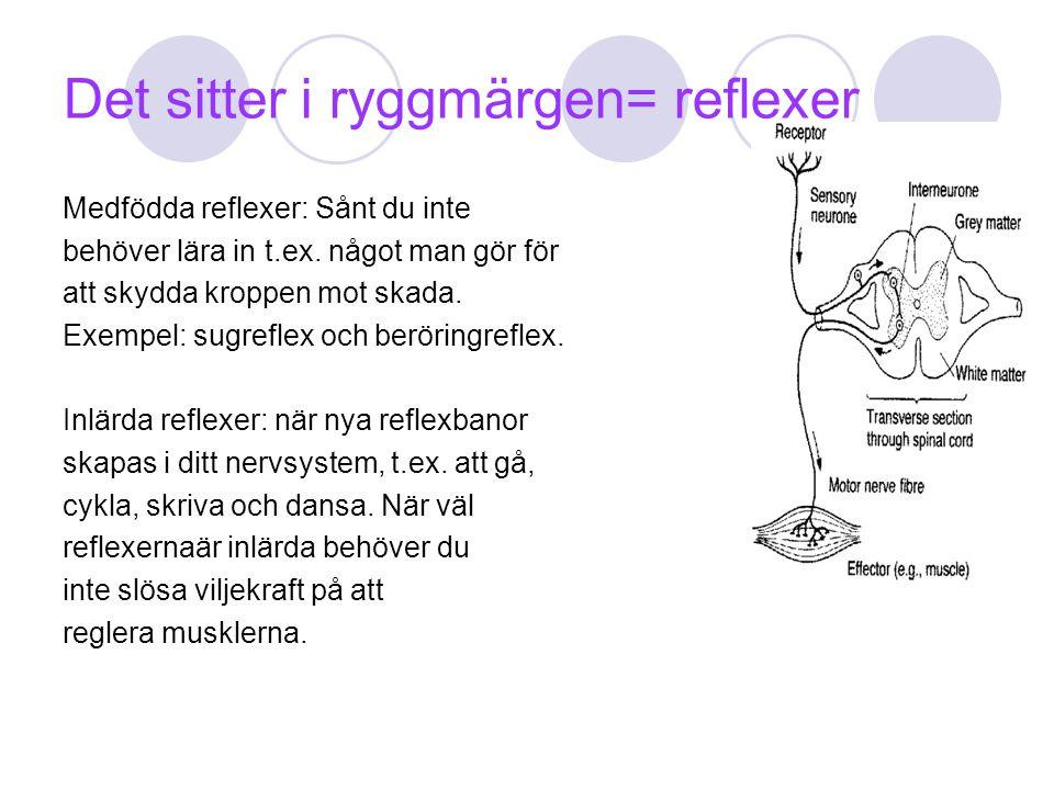 Det sitter i ryggmärgen= reflexer