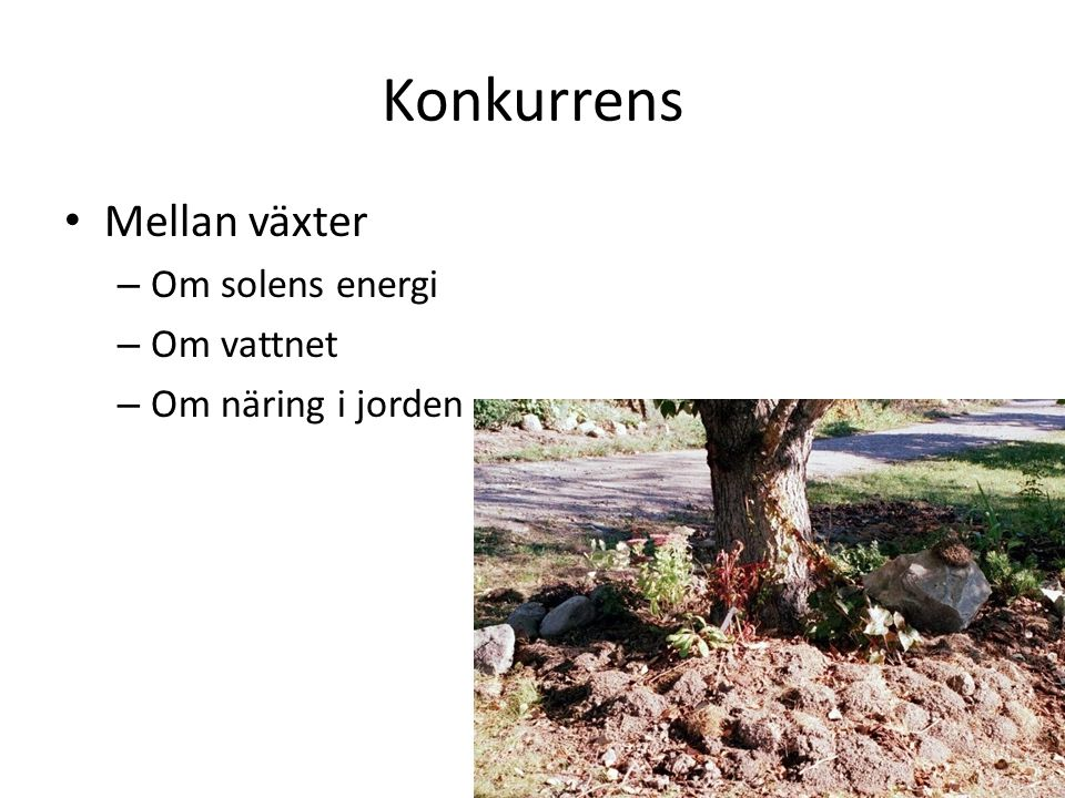 Konkurrens Mellan växter Om solens energi Om vattnet