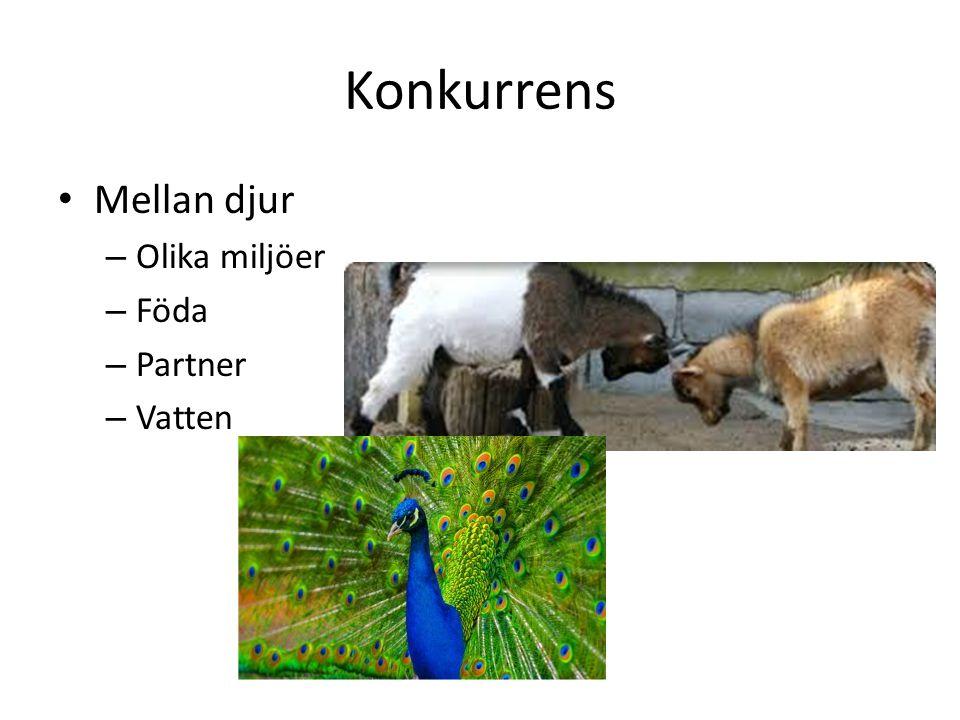 Konkurrens Mellan djur Olika miljöer Föda Partner Vatten