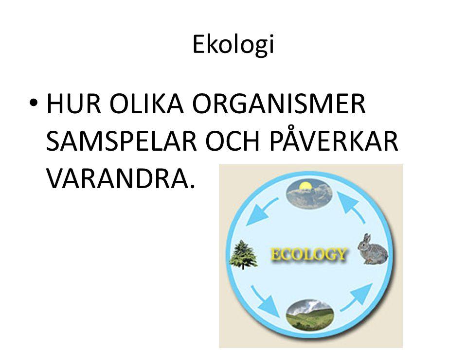 HUR OLIKA ORGANISMER SAMSPELAR OCH PÅVERKAR VARANDRA.